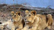 Ο κορωνοϊός απειλεί τον ζωολογικό κήπο του Λονδίνου