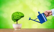 Έρευνα αποκαλύπτει τη διατροφή που βελτιώνει την μνήμη
