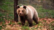 Αρκούδα μπήκε στην κουζίνα σπιτιού και επιτέθηκε σε 54χρονο στο Κολοράντο (video)