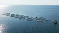«Φύσηξε μαΐστρος» στη θαλάσσια οικονομία