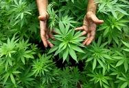 Δυτική Ελλάδα: Τα ναρκωτικά έφεραν χειροπέδες