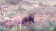 Τρίκαλα: Ήρθαν τετ-α-τετ με αρκούδα στην Ανθούσα Ασπροποτάμου (video)