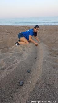 Προσοχή στα μικρά χελωνάκια Caretta Caretta στο Εθνικό Πάρκο Κοτυχίου - Στροφυλιάς