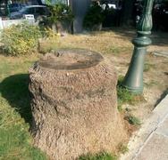 Πάτρα: Μας έμειναν τα κουφάρια από τους φοίνικες στις πλατείες, έτσι για να τους… θυμόμαστε!