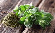 Το ελληνικό αρωματικό φυτό που είναι φυσικό αντιβιοτικό