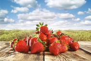 Δυτ. Ελλάδα - Αίτημα ενίσχυσης για την προώθηση της φράουλας στις αγορές της Γερμανίας και της Πολωνίας