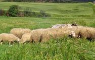 Λαϊκή Συσπείρωση Δυτ. Ελλάδας: 'Oι κτηνοτρόφοι είναι απροστάτευτοι μπροστά στον καταρροϊκό πυρετό'