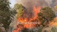 Καίγεται πευκόδασος στο Τρίκορφο Ναυπακτίας (video)