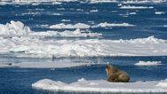 Φέτος έλιωσε η μεγαλύτερη ποσότητα πάγου της Αρκτικής από το 1979