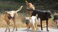 Καταγγελία: Άτομο χτυπάει τα αδέσποτα σκυλιά της Λεύκας στην Πάτρα με μπαλτά!
