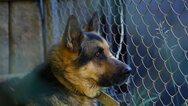 Ουκρανία: Σκυλιά επιτέθηκαν σε 2χρονο αγοράκι