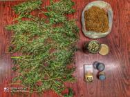 Μεσολόγγι - Καλλιεργούσε κάνναβη στην αυλή της οικίας του (φωτο)
