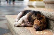 Πάτρα: Διαγωνισμός για την σίτιση αδέσποτων ζώων συντροφιάς