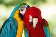 Παπαγάλοι αποβλήθηκαν από ζωολογικό κήπο επειδή άρχισαν τα 'γαλλικά' στους επισκέπτες