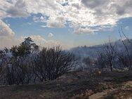 Φωτιά στον Έβρο: Οι φλόγες έφτασαν στο δάσος της Δαδιάς (φωτο)