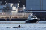 Σκωτία: Έξωση σε φάλαινες από λίμνη όπου θα πραγματοποιηθεί άσκηση του ΝΑΤΟ (video)