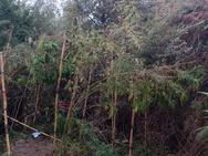 Πύργος: Βρέθηκε στη 'φάκα' για καλλιέργεια και κατοχή ναρκωτικών (φωτο)