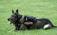 Κιλκίς: Αστυνομικός σκύλος βρήκε πάνω από ένα κιλό κάνναβης και κοκαΐνη