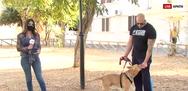Χανιά: «Βροχή» οι αιτήσεις για το σκύλο που βασανίστηκε (video)