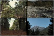 Ανακαλύπτοντας τα μυστικά του μεγαλύτερου δάσους της Αχαΐας (video)