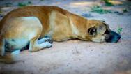 Πάτρα: Αρκετά ζώα έχουν χάσει τη ζωή τους από φόλες στο Σαραβάλι