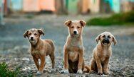 Αιγιάλεια: Διαχείριση αδέσποτων ζώων συντροφιάς