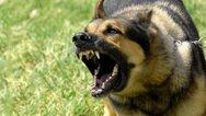 Άγρια επίθεση σκύλων σε κοριτσάκι στην Κορινθία