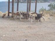 Σαλαμίνα: Eκπέμπει SOS για τα 4.000 αδέσποτα ζώα που βρίσκονται στο νησί