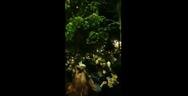 Κορωνοϊός: Πάρτι στο ΑΠΘ - Διασκέδαζαν έως το πρωί 1.500 άτομα (video)