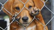 Άρειος Πάγος για κακοποίηση ζώων: Να συλλαμβάνονται και να οδηγούνται στο αυτόφωρο οι δράστες
