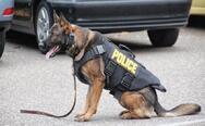 Αστυνομικός σκύλος βρήκε ένα κιλό κάνναβη και οπιούχα σε κάδο στη Χίο