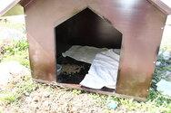 Πάτρα: Συμπολίτης ζήτησε να κατασκευάσει σπιτάκια για τα αδέσποτα