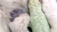 Σαρδινία: Γεννήθηκε κουτάβι με... πράσινο χρώμα (φωτο)