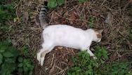 Πάτρα: Βρήκε στην αυλή του έξι γάτες νεκρές από φόλες