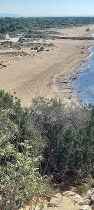 Φθινοπωρινή βόλτα στο δάσος της Στροφυλιάς και την παραλία της Καλογριάς (φωτο)