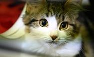 Πάτρα: Ποινή φυλάκισης για τον δεσμοφύλακα που έλιωσε το κεφάλι γάτας με το πόδι του