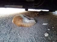 Πάτρα: Κι άλλα νεκρά γατάκια βρέθηκαν στην περιοχή του Σκαγιοπουλείου