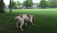 Ο σκύλος που λιποθυμάει από τη χαρά του (video)