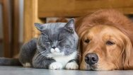 Covid 19: Τι συμβουλεύουν οι ειδικοί για την προστασία των κατοικίδιων ζώων