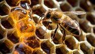 Ζάκυνθος: 48χρονος έχασε τη ζωή του από τσίμπημα μέλισσας