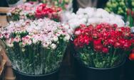 Κορωνοϊός: Σε απόγνωση οι παραγωγοί λουλουδιών