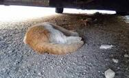 Πάτρα: Φρίκη με τον δράστη ή τους δράστες που αποκεφαλίζουν γάτες