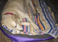 Πάτρα: Το σκυλάκι που δέχθηκε 15 πυροβολισμούς βρήκε ένα ζεστό απάγκιο