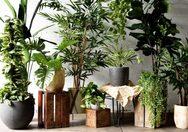 Πώς να φροντίσετε τα φυτά εσωτερικού χώρου τον χειμώνα