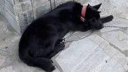 Κακοποίησαν σεξουαλικά σκύλο στην Πιερία