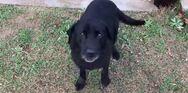 Δυτική Ελλάδα: Νέο περιστατικό κακοποίησης σκύλου