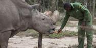 Σουδάν - Η Google τιμά με doodle τον τελευταίο αρσενικό βόρειο λευκό ρινόκερο
