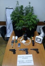 Συνελήφθη καλλιεργητής ναρκωτικών σε δημοτικό διαμέρισμα της Βόνιτσας