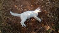 Πάτρα: Τέσσερις γάτες νεκρές από φόλες κοντά στο σχολείο του Ζαβλανίου