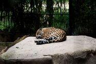 Ο οικοτουρισμός είναι η ταξιδιωτική τάση που ίσως σώσει την άγρια ζωή της Νοτίου Αμερικής